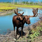 Aljaška – nespoutaná divočina